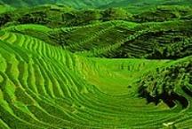 Asien / Asien ist mit rund 44,6145 Millionen Quadratkilometern der größte Kontinent und Teil Eurasiens. Es umfasst etwa ein Drittel der Landmasse der Erde. In Asien leben mit etwa vier Milliarden Menschen etwa 60 Prozent der Weltbevölkerung... http://de.wikipedia.org/wiki/Asien