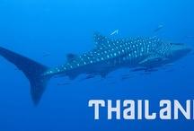 Asien - Thailand / Das Königreich Thailand ist ein Staat in Südostasien. Es grenzt an Myanmar, Laos, Kambodscha, Malaysia, das Andamanische Meer und den Golf von Thailand... http://de.wikipedia.org/wiki/Thailand