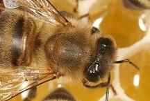 bee keeping / by Jeanee Allen