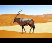 Afrika - Namibia / Namibia ist ein sehr dünn besiedelter Staat im südlichen Afrika zwischen Angola, Sambia, Botswana, Südafrika und dem Atlantischen Ozean... http://de.wikipedia.org/wiki/Namibia