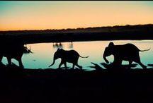 Afrika - Simbabwe / Simbabwe, das ehemalige Südrhodesien, ist ein Binnenstaat im südlichen Afrika. Der Name Simbabwe geht auf die heute Great Zimbabwe genannte Ruinenstätte zurück, die größten vorkolonialen Steinbauten im südlichen Afrika... Quelle: http://de.wikipedia.org/wiki/Simbabwe