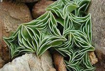 Succulents + Air Plants
