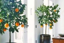 Interior with Plant / Plants as an accent for the Interior Design