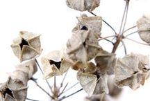 Seeds + Pods