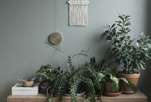 Greenery / Plants, trees and greenery for the home