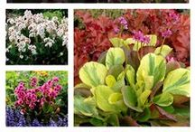 Fabulous Foliage Plants / Great ideas for plants with stunning foliage, from ornamental grasses to perennials, shrubs to trees.