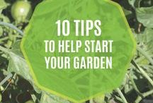 Gardening / Have a green thumb? Don't let bladder leaks keep you from doing the things you love! Here we'll provide tips and tricks that help you get outside and eat smarter with gardening hacks—from bladder friendly herbs and spices to the vegetables in your produce garden!