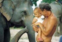 Elephant - Elefánt