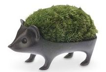 Sprout / by Dee Piotrowski