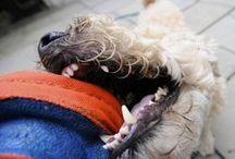 Keeping Pets Healthy / by vetstreet.com