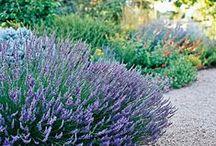 Garden / Gardening and landscaping ideas. / by Pregnant Chicken