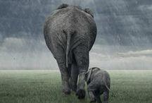 Elephant - Elefánt 2