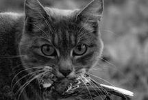 (Wild) Animals / by Eva S.K.