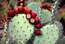 Arizona / by Paulette
