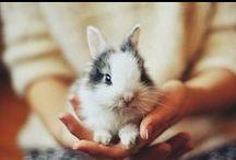 Honey Bunny / by Ernie Lee
