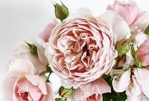 Floral / by Ernie Lee