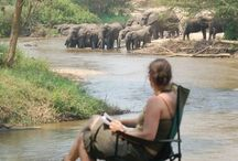 """Travel -  Safari / I have another Africa board.  """"Out of Africa""""  / by kkbelle NZ"""