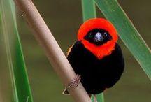 Birds of Africa / Birds of Africa. Love Africa and really love the diversity of the birdlife