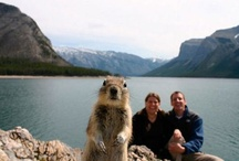 PhotoBomb / by Misty Brewer