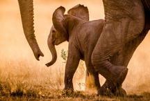 Elephants / by jbm quilts