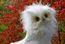 Owls / by Bonnie Dodson