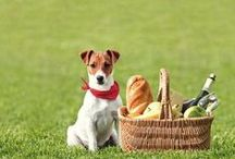 Pet Picnic / This is what you should do: Love the Earth, the Sun and the Animals