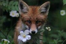 corvie dale mulder nutkin owling selkie / crow chipmunk fox squirrel owl otter - my fav's / by deirdre lee