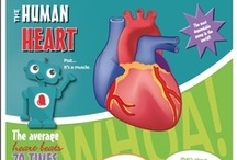 Health Teacher Lesson Plans / Learn about the heart, blood, cardiovascular system, and circulatory system with Texas Heart Institute's free heart health education lesson plans for teachers. / by Texas Heart Institute