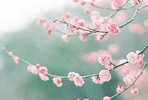 seasons | spring inspiration / Inspiration from spring, spring fashion, spring florals, spring mood.