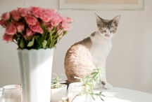 Kittehs / by The Queen of Spain