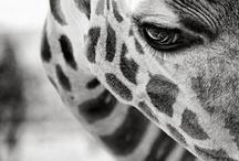 Animals Black & White Pictures