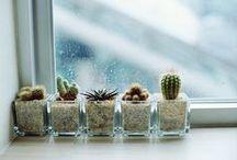 decorating w/ houseplants / living w/ plants / by Heath Ashli LeFebvre