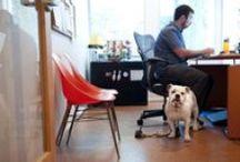 Small Business: Office Culture, Hiring & Firing