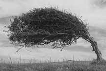 ~Tree