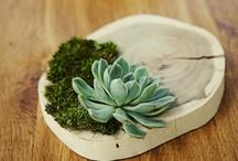 Nature et Plantes