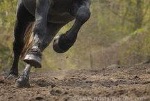 Hester ~ Horses