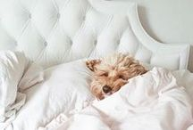 Furry Friends / Trufora is a certified vegan and cruelty free skincare brand - we love our animals!