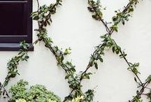 heart outdoor spaces-gardening / Inspiration for your outdoor spaces, gardens and more. / by Meagan | Row House Nest