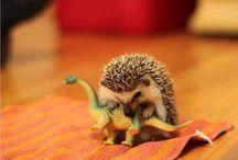 CUTE <3 / Cutie pies and aaaaawwwwwws