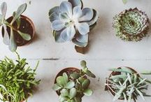 heart plants / I am obsessed with my plants - always looking for new houseplants  / by Meagan | Row House Nest