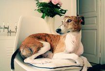 hound / by Juan Ignacio Soneyra
