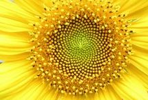 *Yellow* Inspiration Board