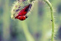 ladybird ladybird fly away home....