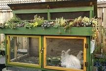 Farm ~ Rabbits