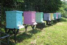 Farm ~ Bees