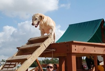 TEEX Search Dogs / by Texas A&M Engineering Extension Service - TEEX