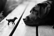 Animal Love / Proud lover of Labs....  And others / by Jen
