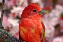 Beautiful Birds / by Donna Kretschmer DiTusa