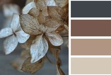 Home - Color Palette