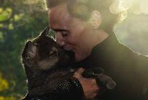 Hiddleston / Tom Hiddleston